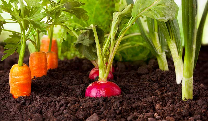 cool season veggies.jpg
