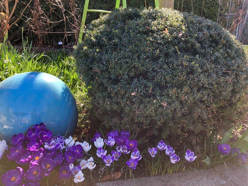 Conifer in Steve's yard.jpg