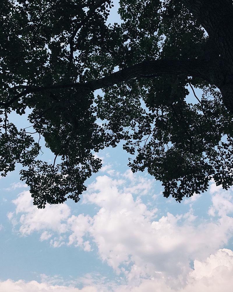 clouds-trees.jpg