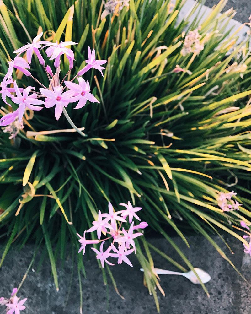 flowerspoon.jpg