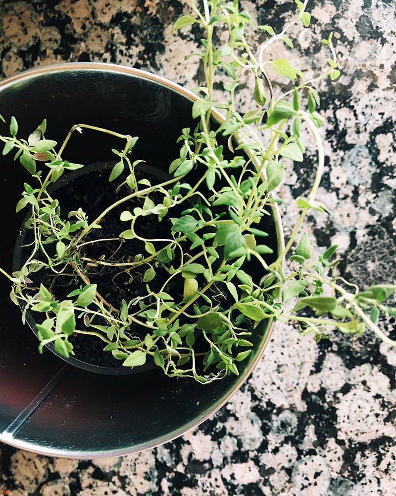 vegbroth-thyme.jpg