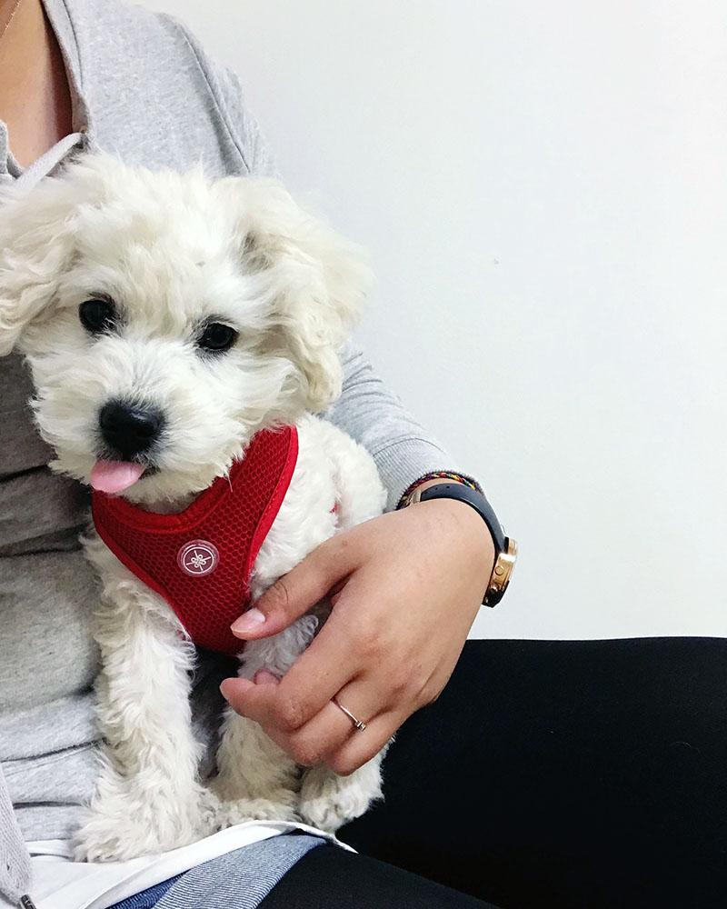 puppy-vet-02.jpg
