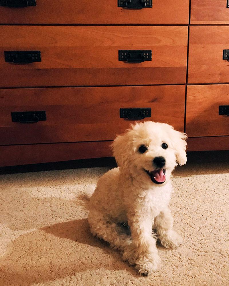 puppy-smile.jpg
