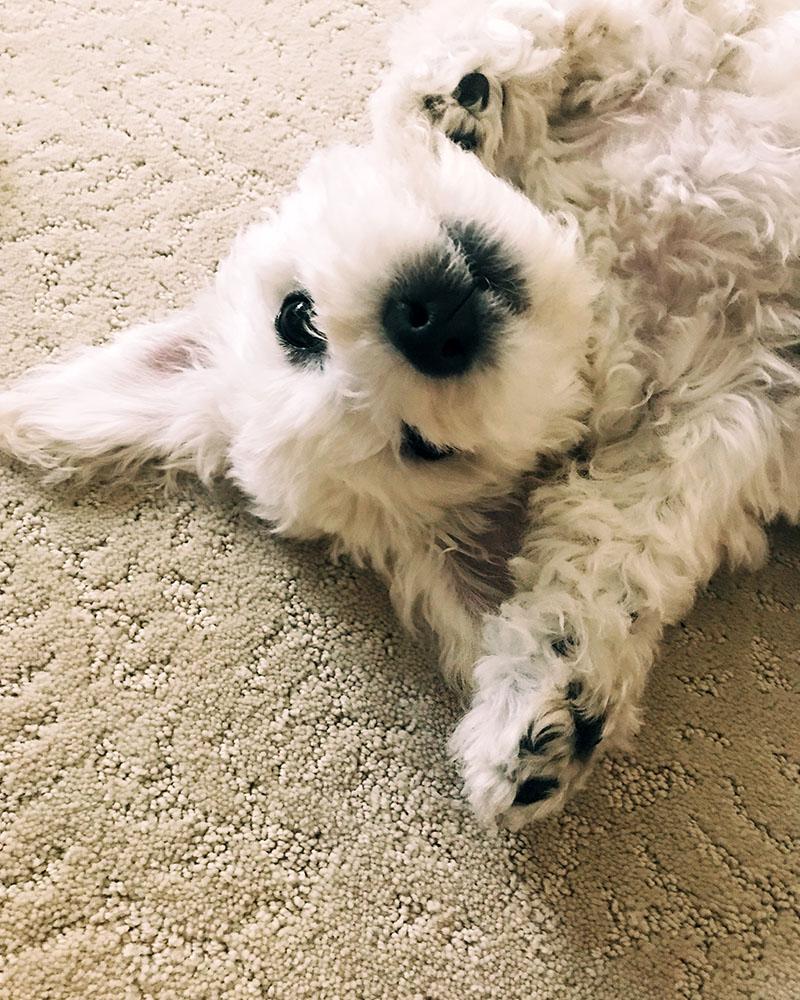puppy-face-02.jpg