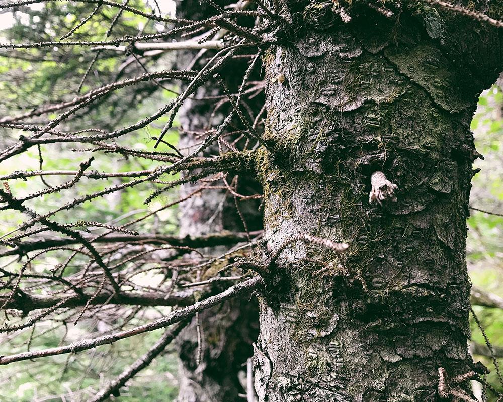 180716-trees.jpg