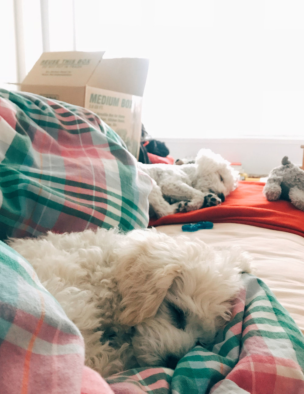PUPPIES-SLEEPING-BED.jpg