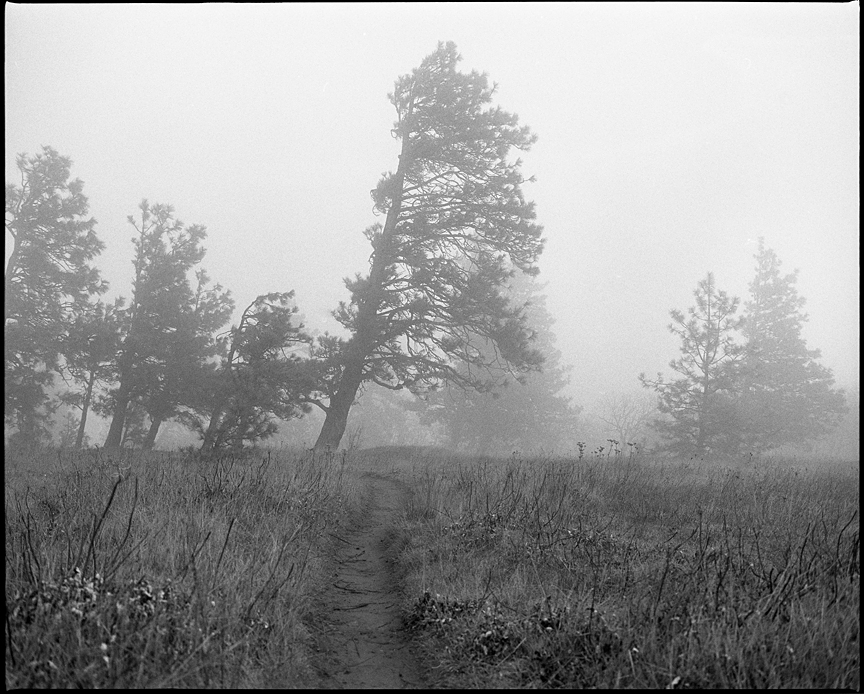 Photographed with a Mamiya RZ67 and Kodak TMax 400 Film