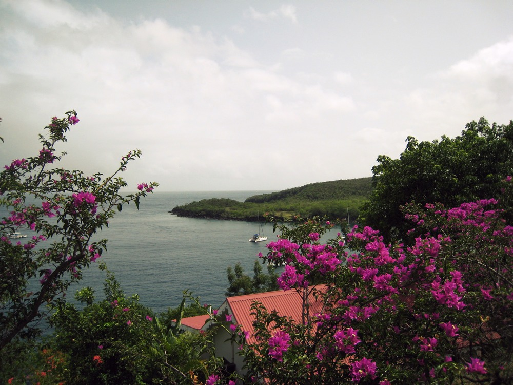 Carribbean -