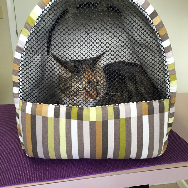 Another happy #FriendlyTraveler! #CatCarrier #CatTravel