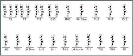 Clarinet DNA Fingering Chart