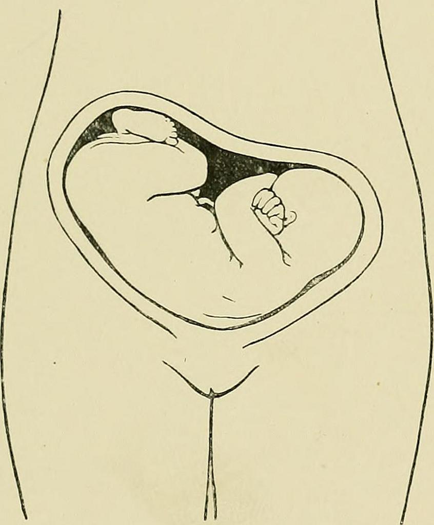 midwifery.jpg