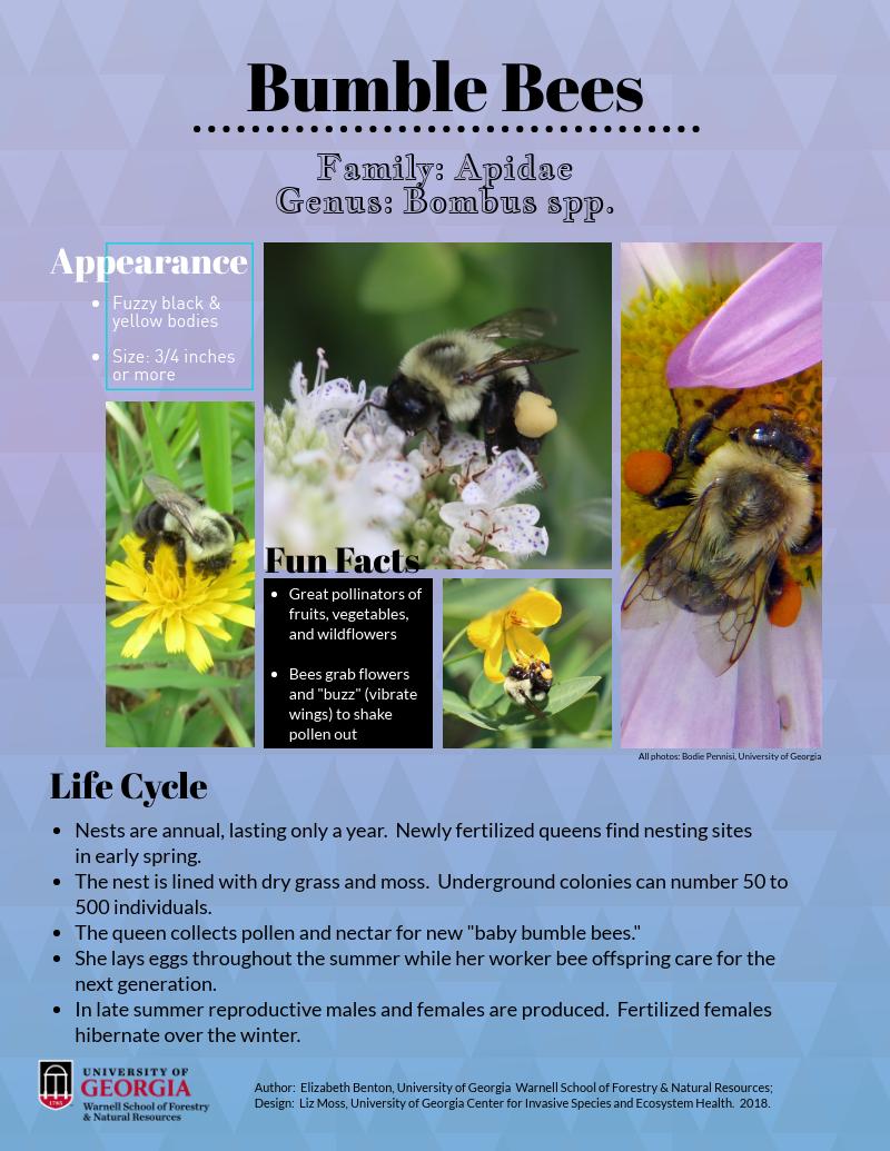 Bumblebees_Benton.Moss_2018.png