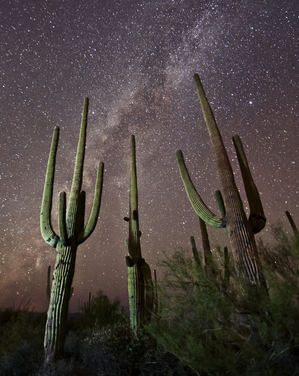 Photo by saguaropics/iStock / Getty Images