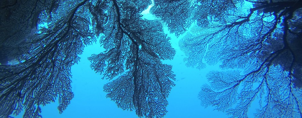 "As I swam through the dark path of an underwater cave, I reached the opening and took this shot of fan coral waving in the ""breeze"" of the currents: Soft Coral Dive, Fiji"