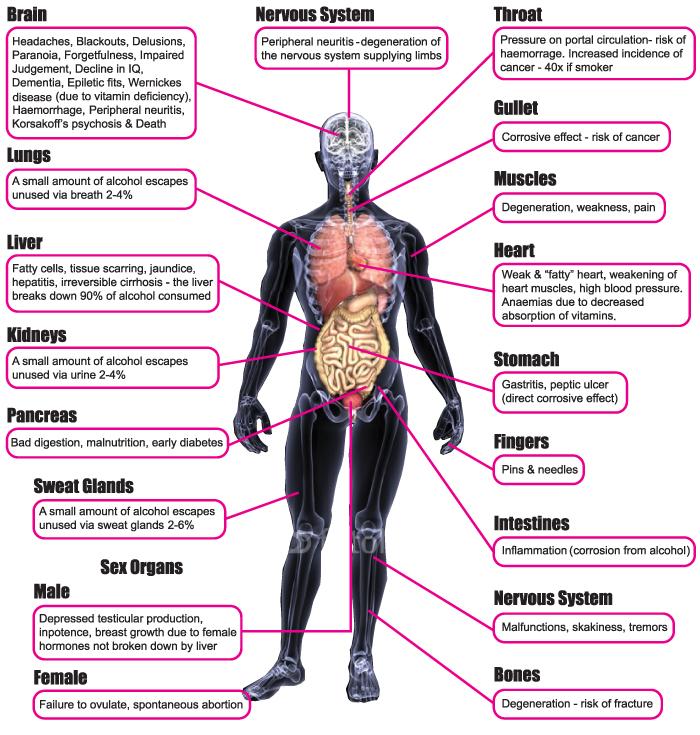 Garcinia cambogia slim fit