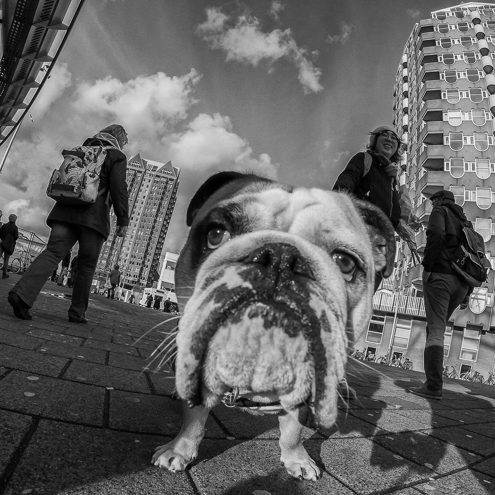 Rotterdam Street Photo-372.jpg