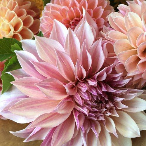 Fall flowers share tanglebloom vermont flower farm fall flowers share mightylinksfo