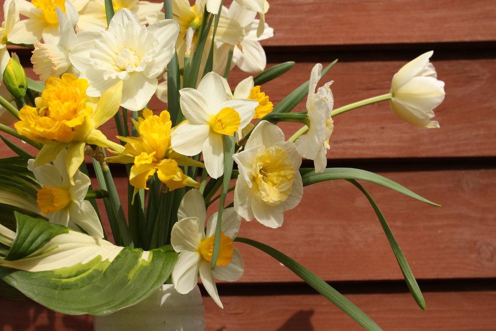 Spring flower CSA