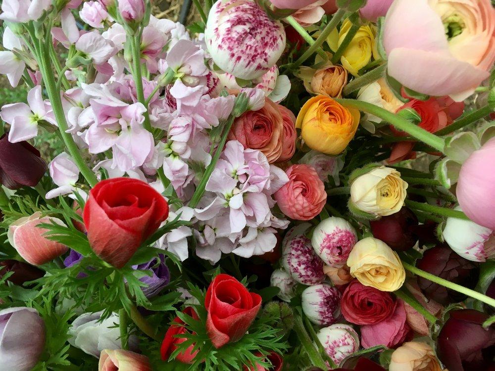 Blog — Tanglebloom :: Vermont Flower Farm