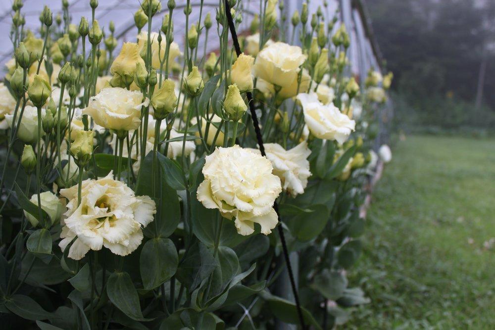 Vermont flower farm apprenticeship