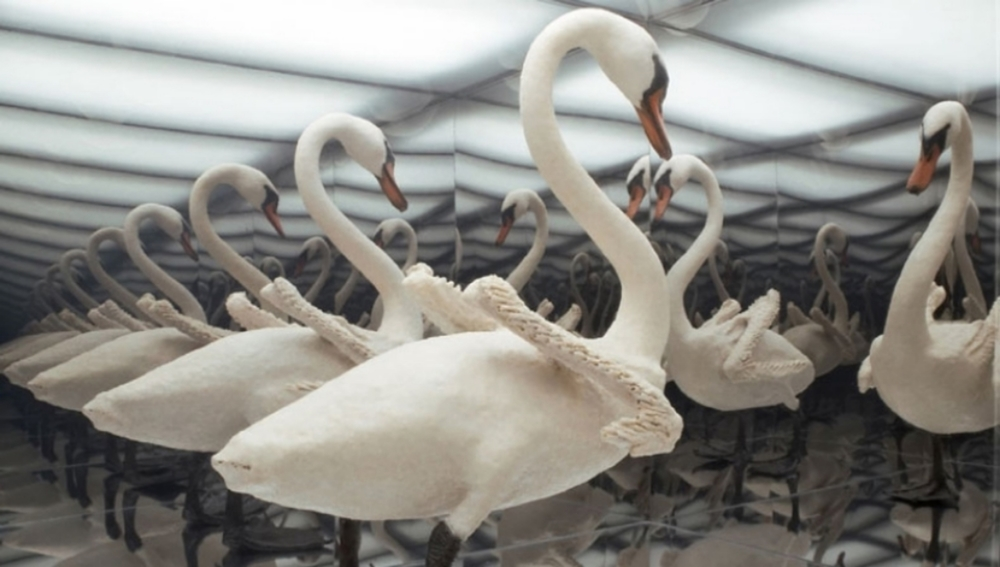 Image: Jane Benson, Naked Swan, Plexiglass, taxidermy swan, lights, two-way mirror, aluminum and silicon, 2006 / ©Jane Benson