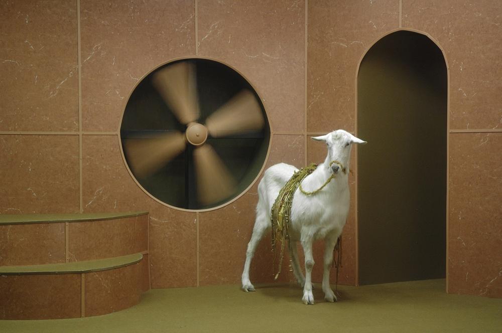 Image:Hayden Fowler,Goat Odyssey iii, film still, 2006 /Image©Hayden Fowler