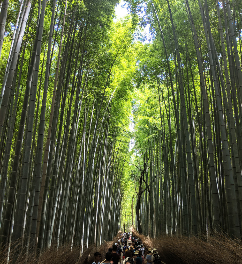 An image of the Arashiyama Bamboo Forest in Kyoto Japan I went to visit!