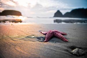 starfish-sunset-and-the-beach