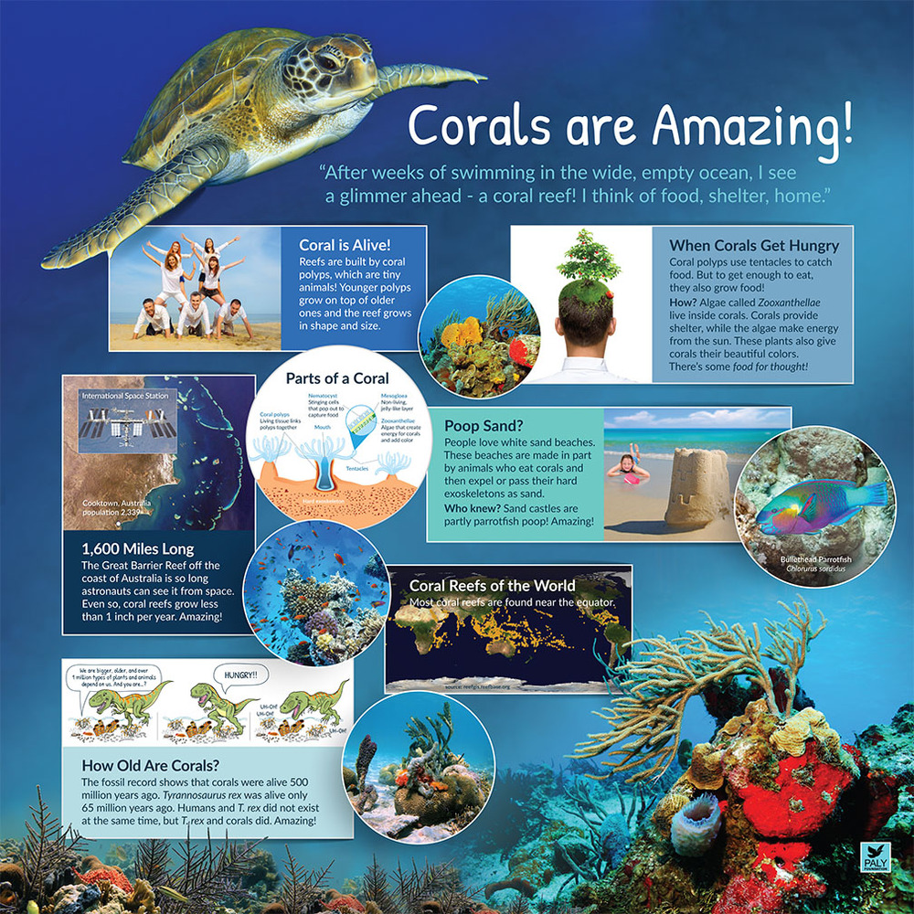 Coral_Reefs_Nurseries_of_the_Sea_Introductory_Panel_NatureExhibits_Paly_Foundation_Web.jpg