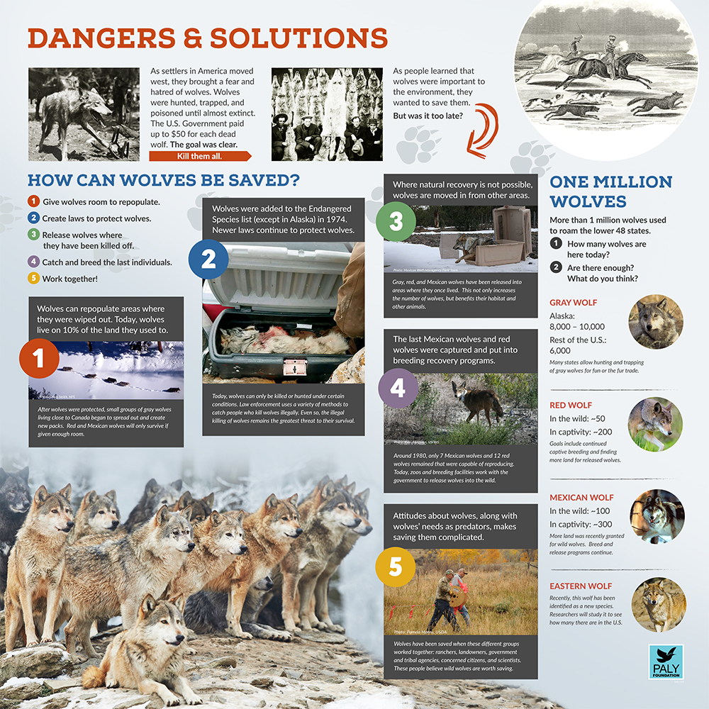 Wolves_Dangers_and_Solutions_Paly_Foundation_Web.jpg