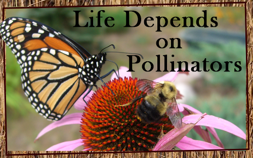 Pollinators-Exhibit-Coming-Soon.png