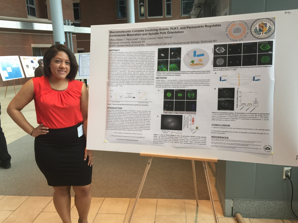 Tiffany presenting her poster talking about Gravin, Pericentrin, and PLK1 in centrosome maturation. She was awarded a Research award on her Senior Research at Syracuse University and will be graduating this spring. Congrats Tiffany!