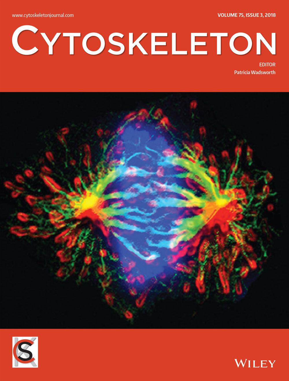 Vertii_et_al-2018-CytoskeletonB.jpg