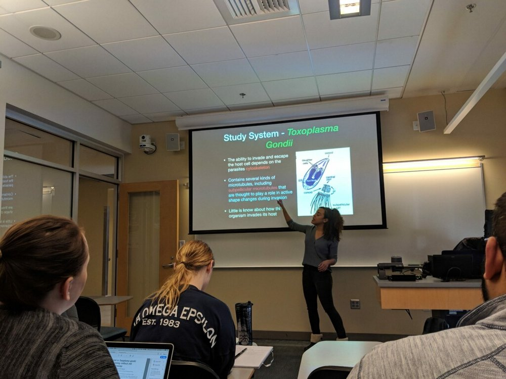 Michelle presenting on Widefield Microscopy with deconvolution using the model organism Toxoplasma Gondii.