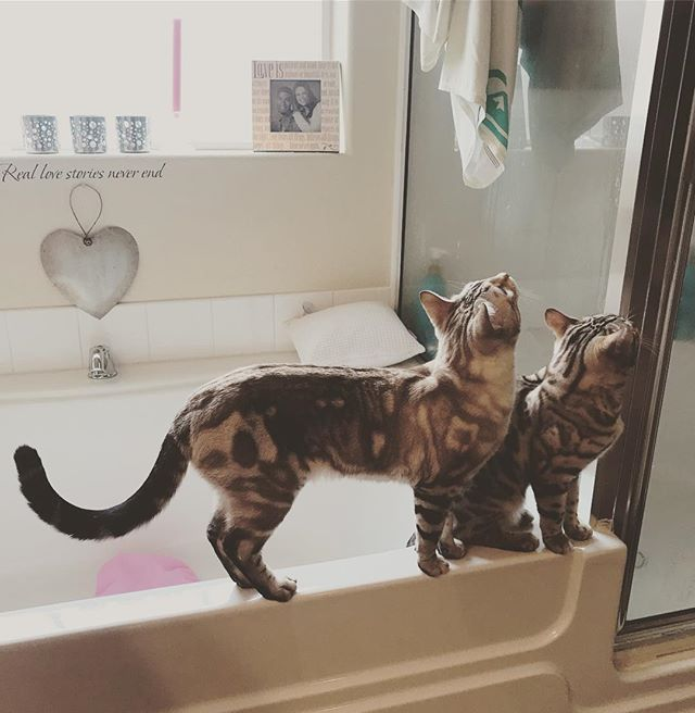 Saturday morning bathroom adventures with these two:) #missyelliotbengals