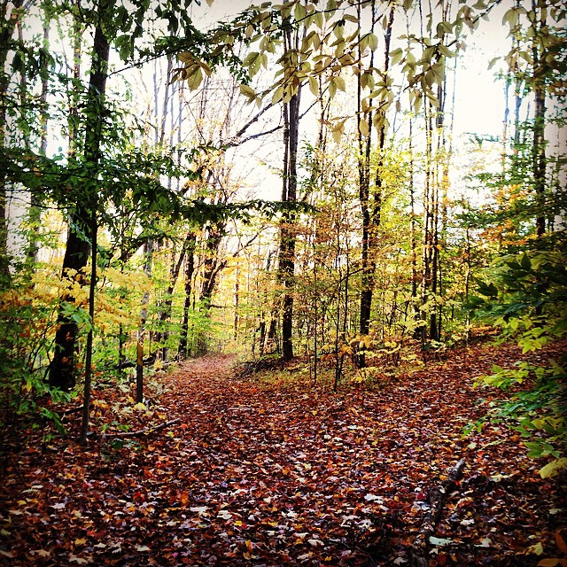 Hope you all have been enjoying Fall as much as we are...#fall #upstateny #beauty