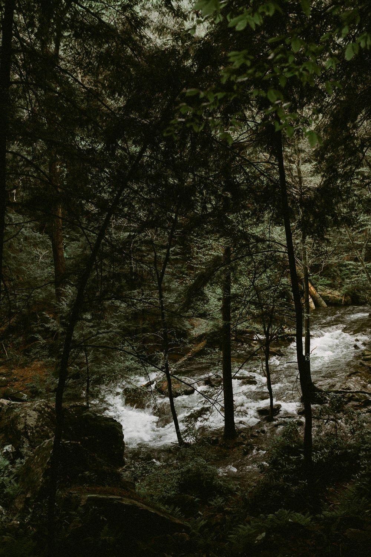 Tennessee_Shoots-2.jpg