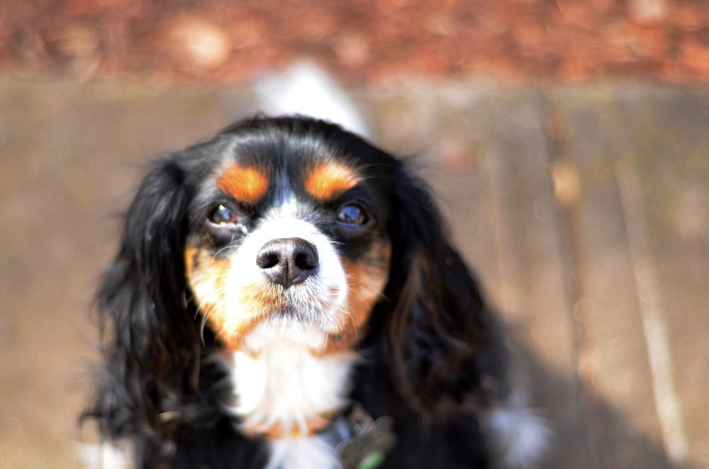 Coletrane cutest nose ever.jpg