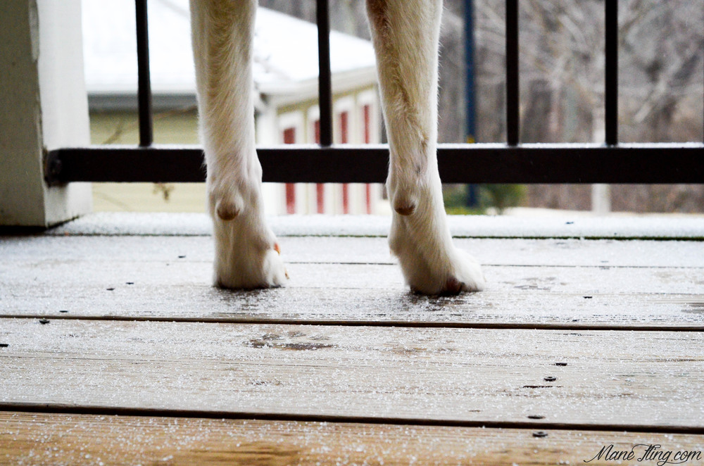 rossi both paws.jpg
