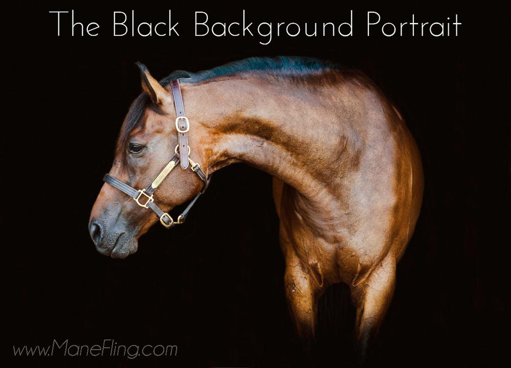 Black Background Equine Portraits show off stunning necks on you equine partner.