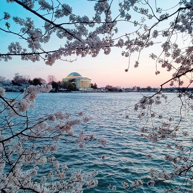 This place, these blossoms - they never get old