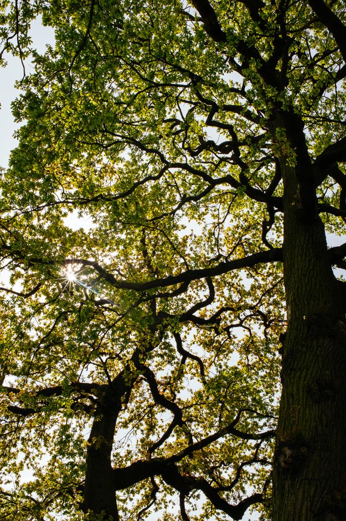 Walton-on-Thames_04052015-37.JPG