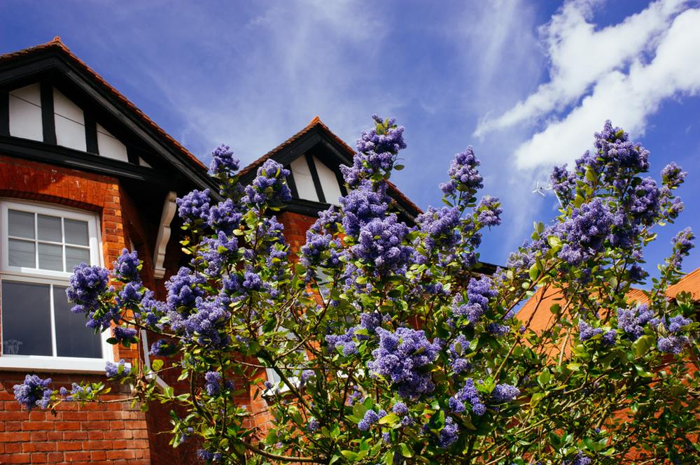 Walton-on-Thames_04052015-42.JPG