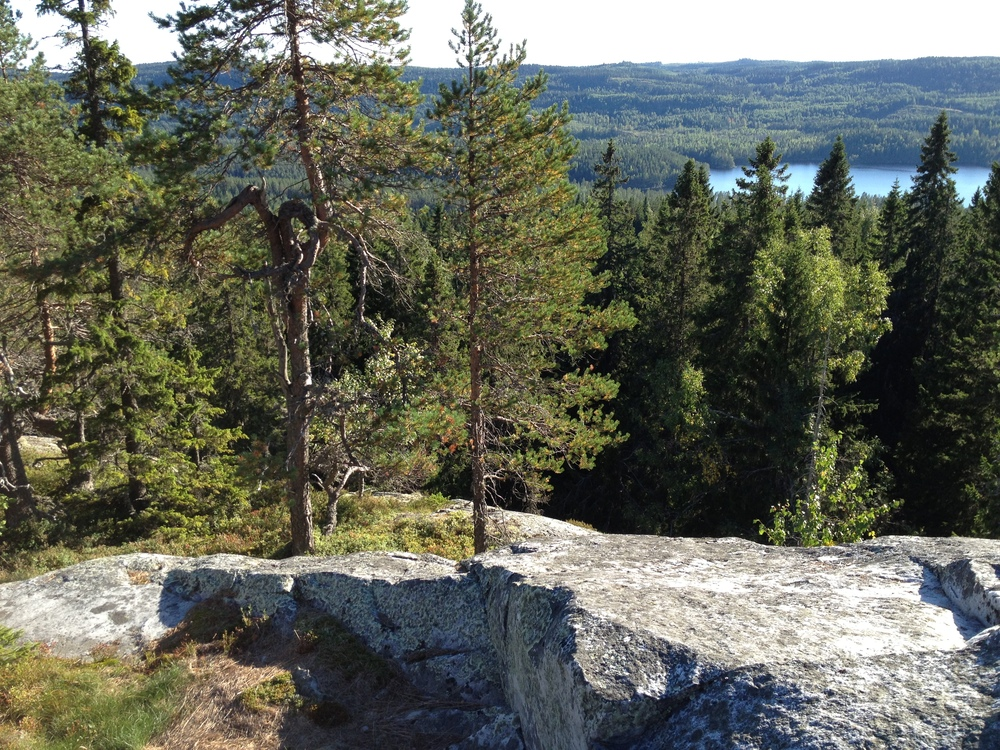 Paimenvaara (Koli National Park)