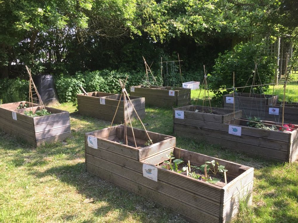 The allotments at St Giles School. Fruit and vegetables grown here will be used in the brand-new Learning Kitchen. Penguin PR: public relations, press, media and communications.