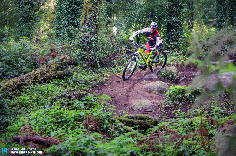 Colares perfect green woody trails