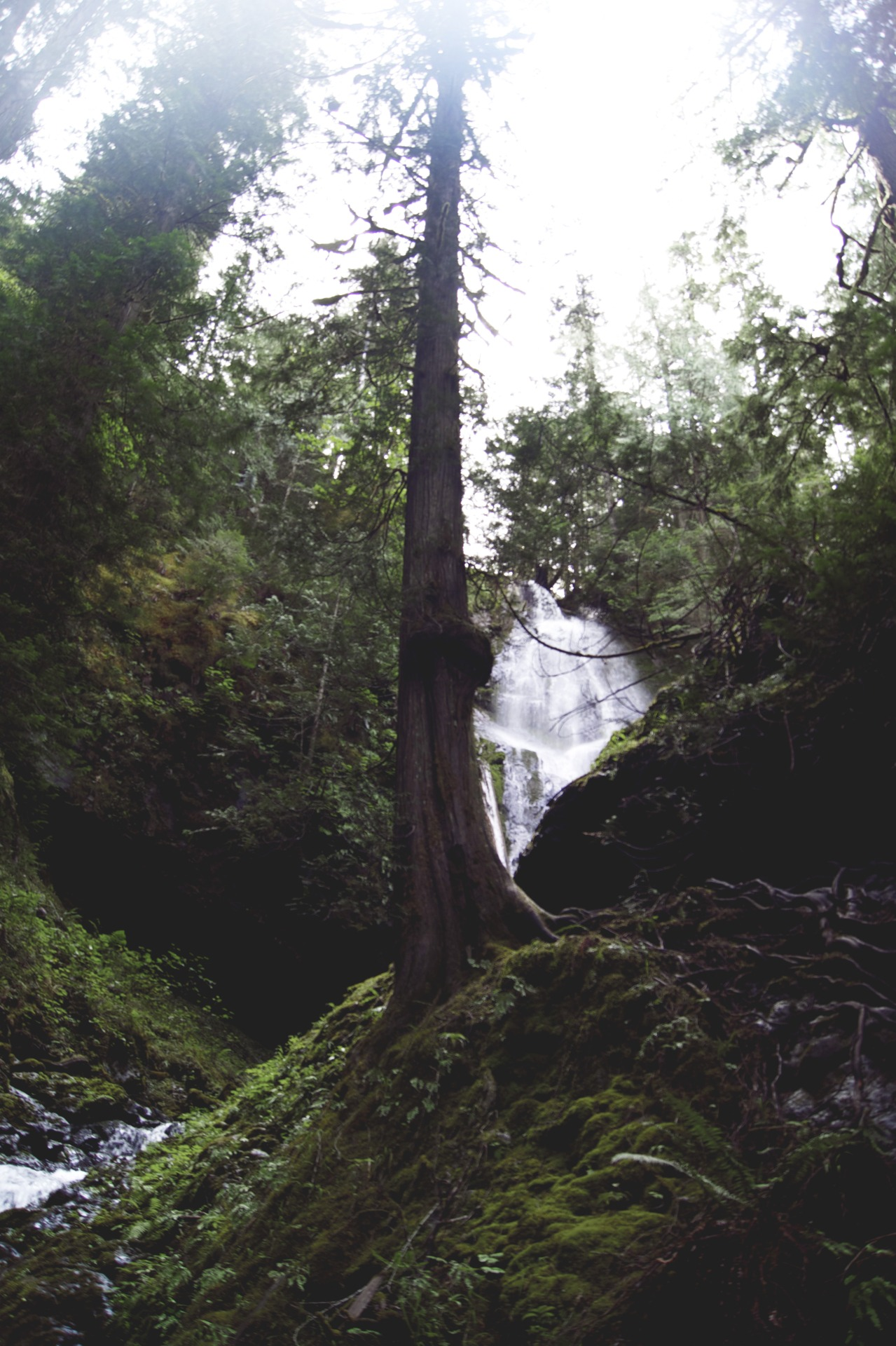 northwezt: Murhut Falls | Washington ➤ Alesha Brown (northwezt)