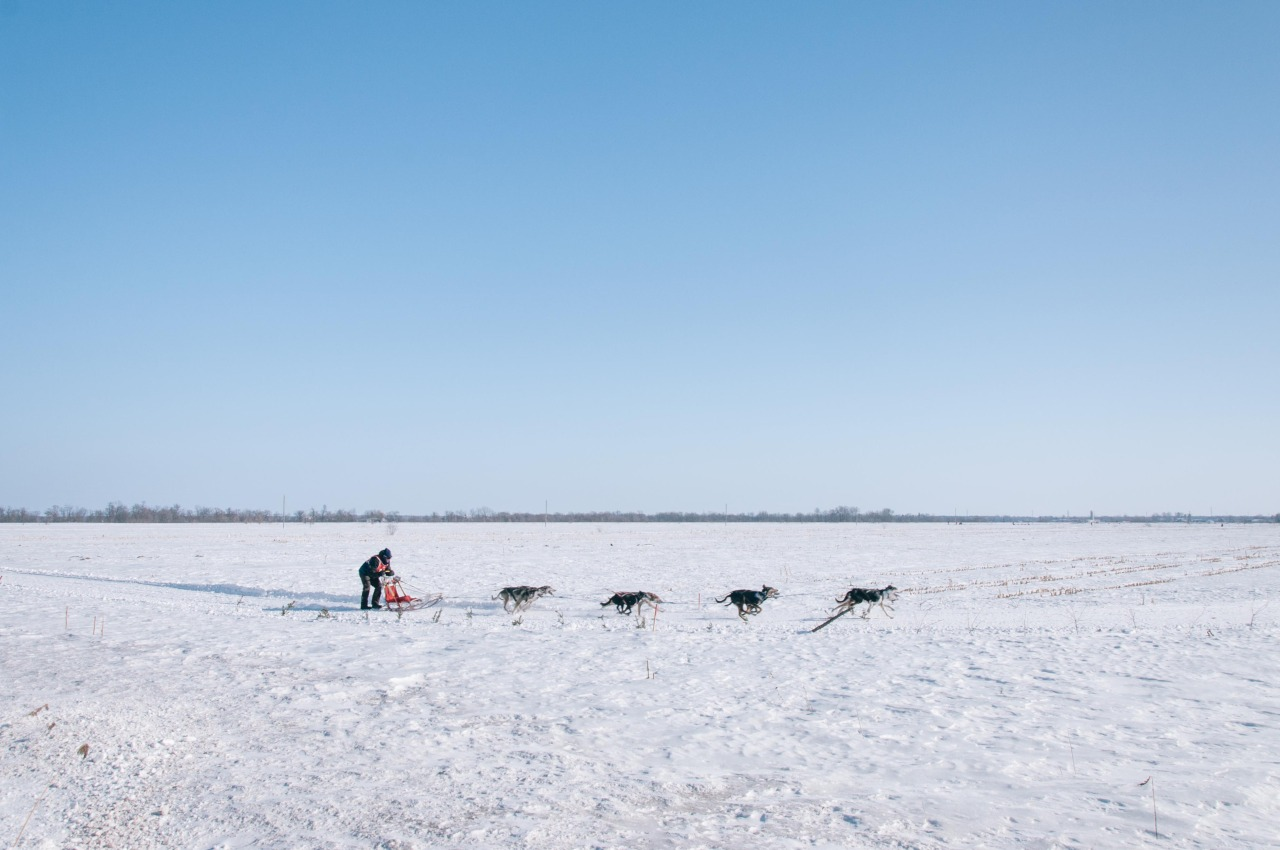 Dog sled racing near Montreal