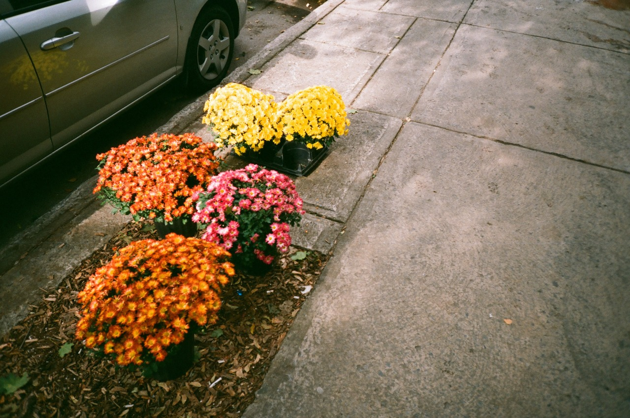 pavements should be filled with flowers