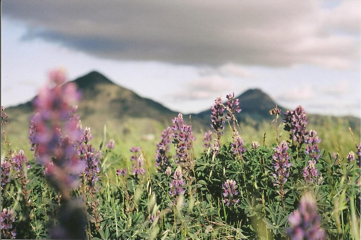 bellsofmindfulness :     Springtime on Terrace Hill, San Luis Obispo. Taken with my Canon AE-1 and Kodak Ektar 100.     Yes for the view and the Ektar and the view.